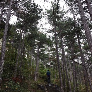 SundayStroll through the pine woods we walk up to thehellip