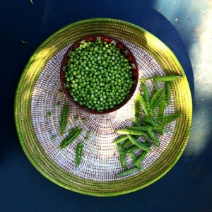 picking out peas with my mum growyourownfood homegrown peas igersaustriahellip