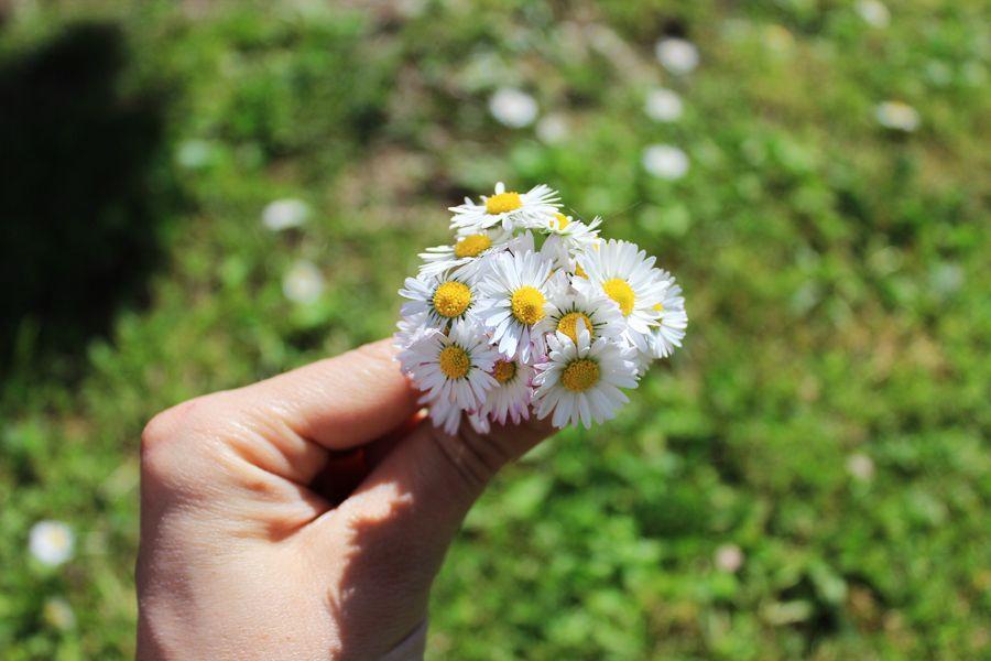 daisy_bunch