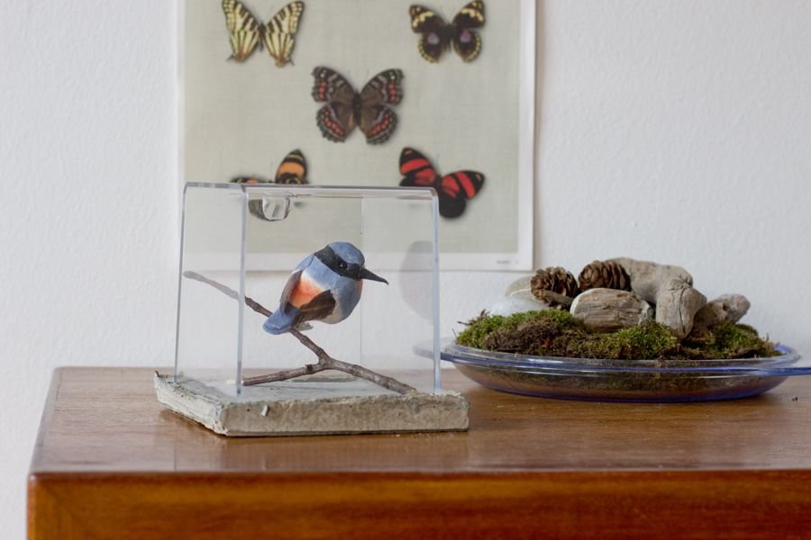 bird-terrarium-DIY-concrete-cement-ideas