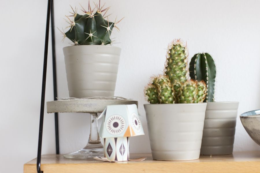 tea-shelf-decoration-cactus-stand