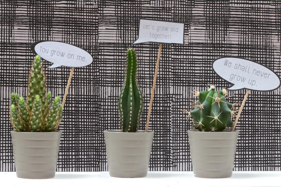 cactus-present-valentines-day-plant-speech-bubble