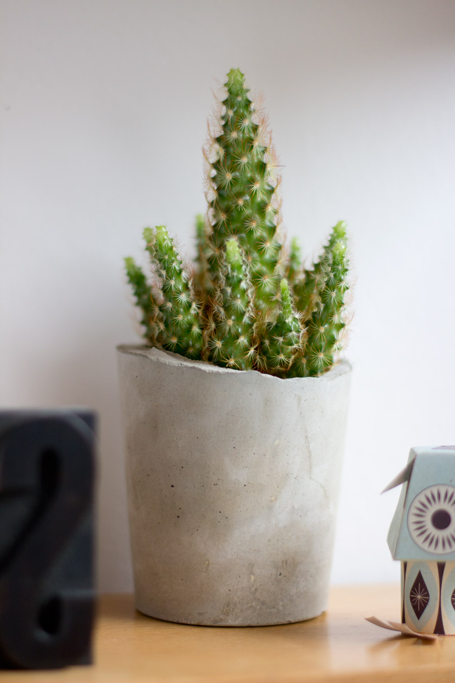concrete-cup-planter-cactus
