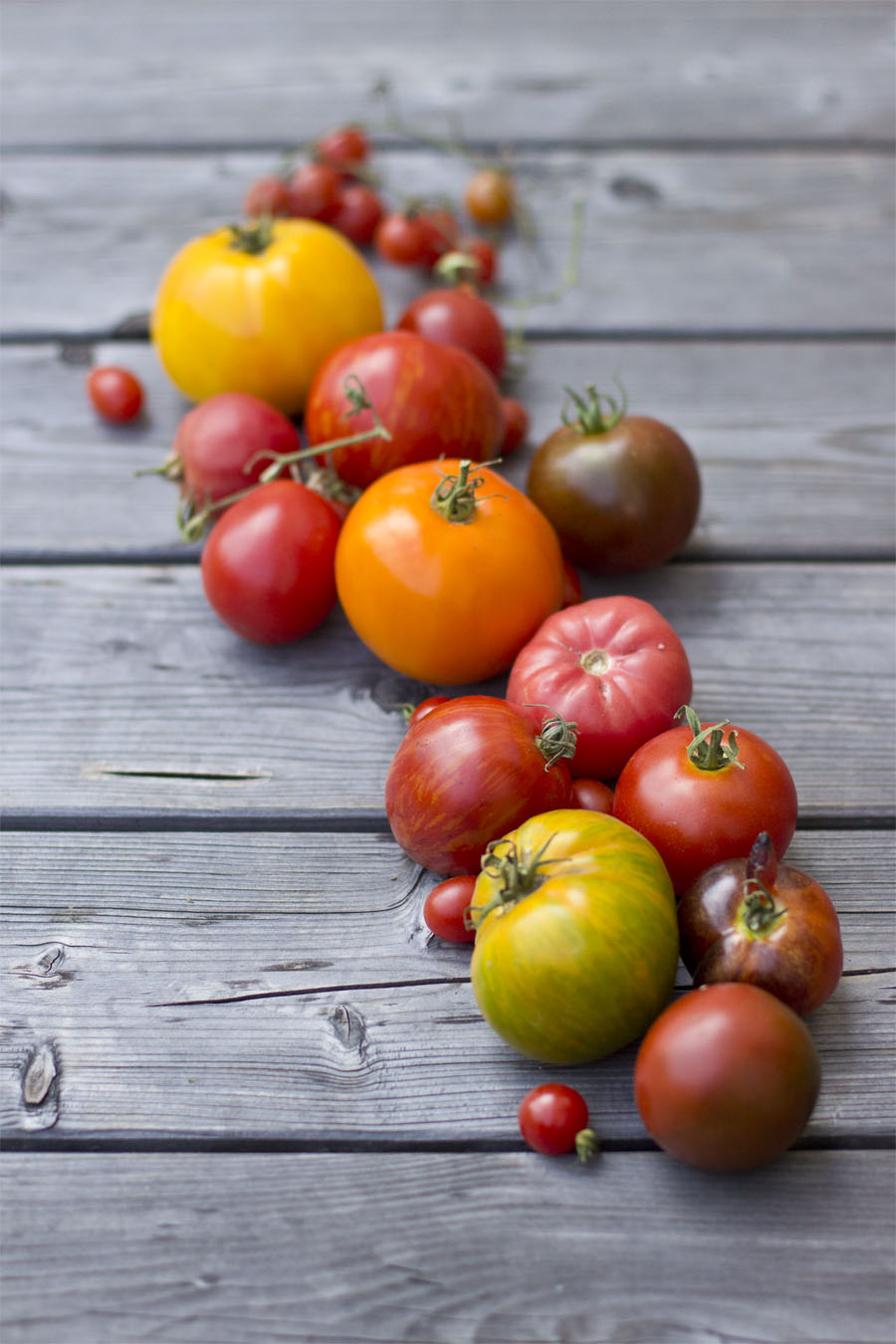Heirloom tomato variety | LOOK WHAT I MADE ...