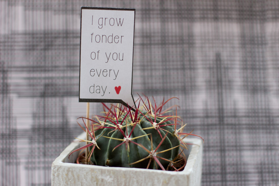 i grow fonder of you every day cactus valentine's day speech bubble