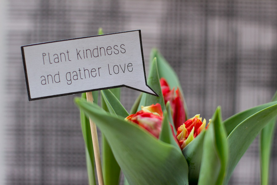plant-kindness-and-gather-love-valentines-day-plant-speech-bubble