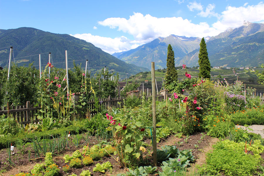 south-tyrol-wild-herbs-garden