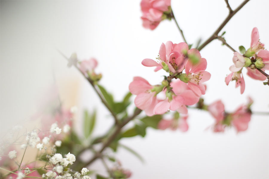 sping-blossoms-details-home-decor